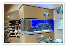 Normal Aquatics - Custom Aquarium Installations, Maintenance, Pond Installations - Greenwich, CT