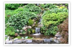 Pond Installation, Design, and Repair Services - Greenwich, CT