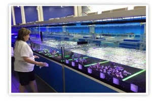 We are one of the largest aquarium shops in Connecticut and bring a lifetime of commitment to exotic marine life.  Our warehouse is a vast 5,000 sq/ft, and our system contains over 9,000 gallons of saltwater that house our healthy livestock.