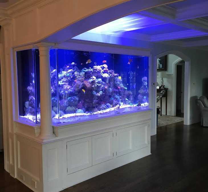 Connecticut Aquarium Lighting Supplies – Upgrade Fish Tank Lighting – Reef Tank LED