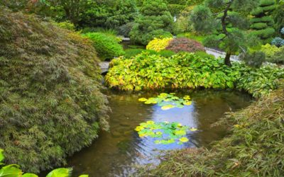 Benefits of Pond and Water Feature Installation | Glen Ridge, West Orange, Montclair, NJ