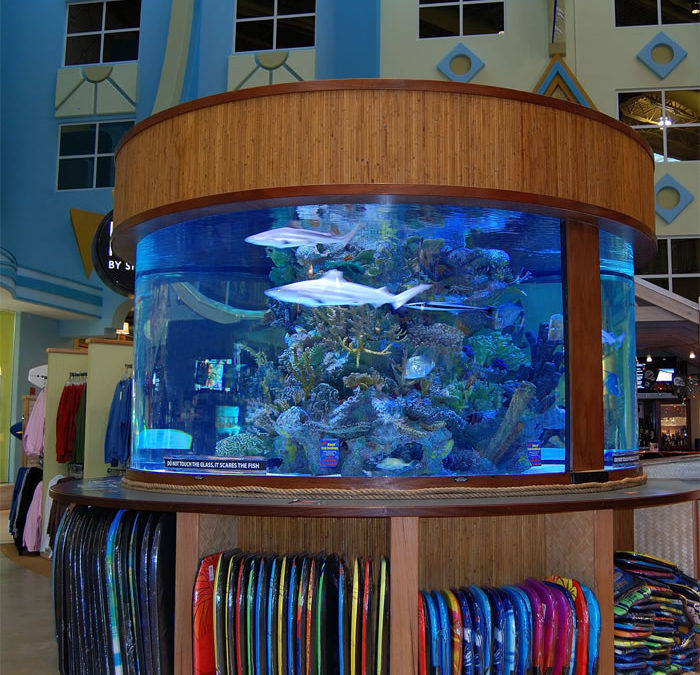 Choosing the Best Connecticut Aquarium Services Company