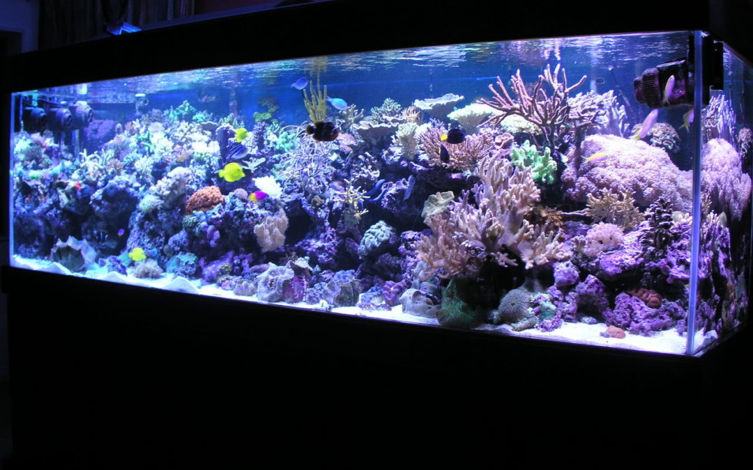 Connecticut leading aquarium maintenance and service company