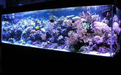 Ridgefield, New Canaan, CT – Fish Tank Care and Saltwater Aquarium Maintenance Tips for Beginners
