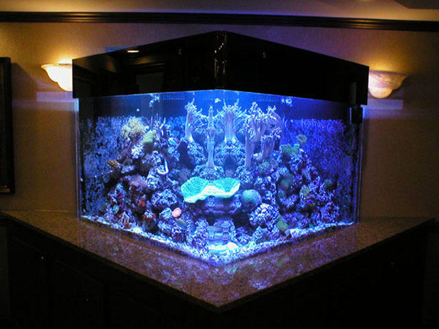 Custom Acrylic Aquariums and Aquarium Filtration Systems in Connecticut