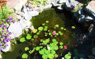 Pond, Fountain, Water Garden Cleaning & Winterization Services | Westchester County, NY