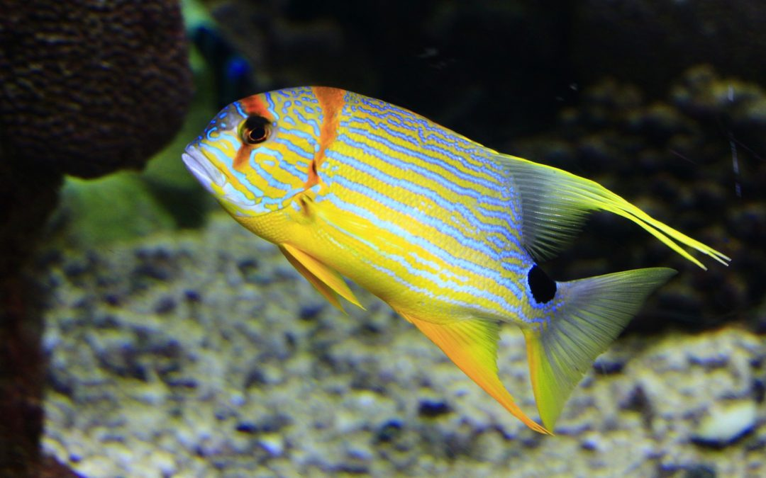 Introducing New Fish Into Your Saltwater Aquarium | Stamford, CT