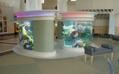 Connecticut Aquarium Maintenance and Fish Tank Care Services