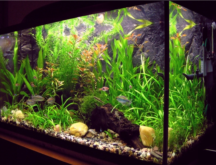 Carpet Plants for Your Aquarium – Aquatic Landscaping – Aquarium Maintenance in Connecticut