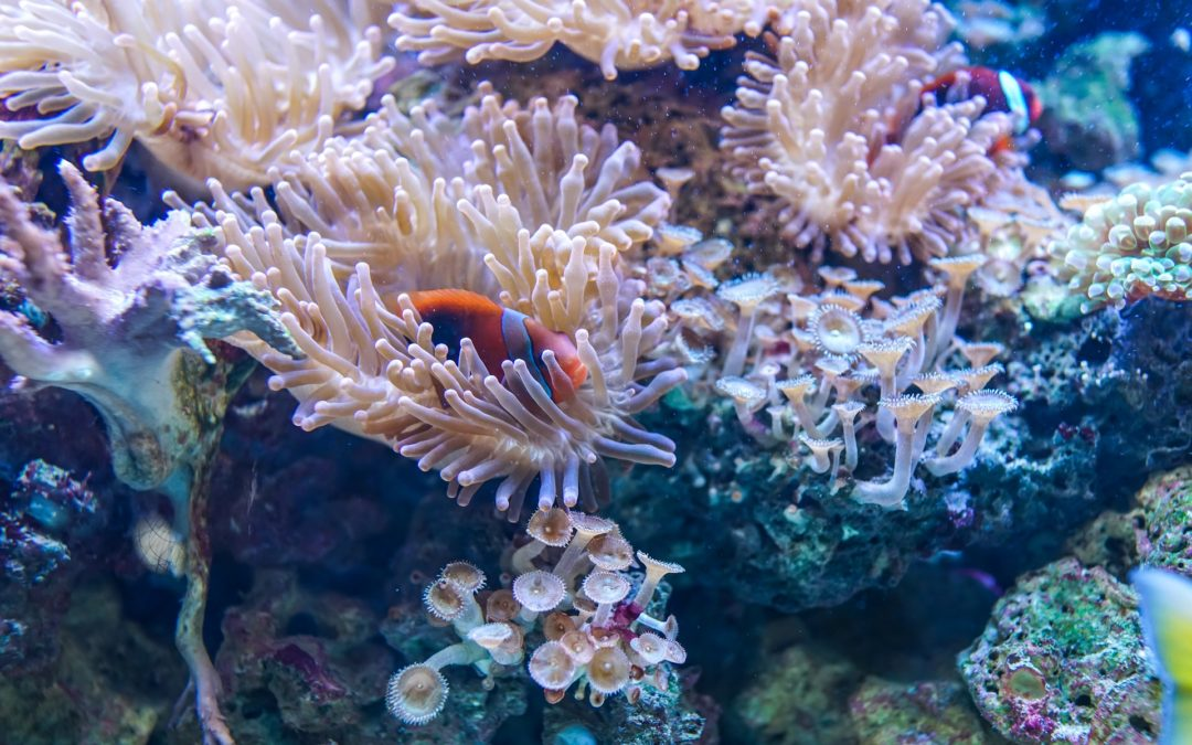 Choosing Fish, Corals, and Invertebrates for a Reef Aquarium – Connecticut, New York City