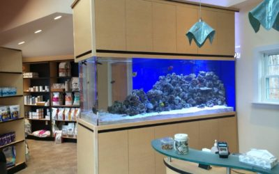 Custom Aquarium Cabinetry and Fish Tank Stands in Connecticut