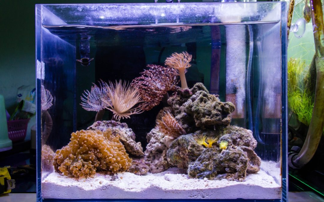 Benefits of Owning a Nano Aquarium – Custom Aquarium Design Services in Connecticut