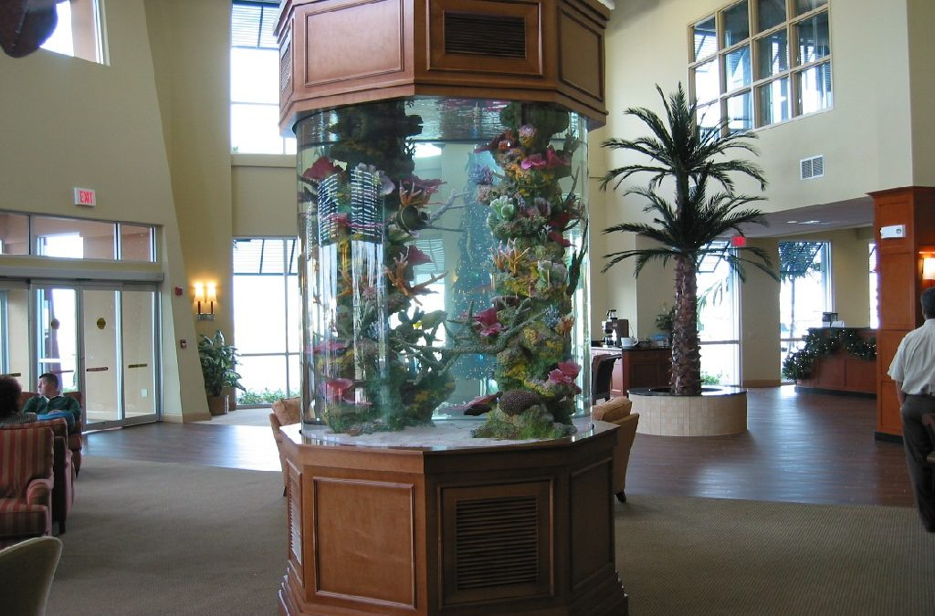 New Bedford, Fall River, MA – Emergency Fish Tank Service & Aquarium Maintenance