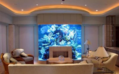 Nassau, Suffolk County Long Island – Fish Tank Cleaning Aquarium Maintenance Services