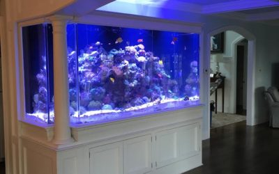Connecticut Aquarium Cabinets and Fish Tank Stands | New London, Hartford, Stamford, CT