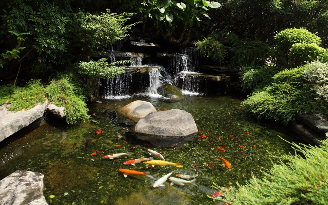 Connecticut Pond Design & Build Services – Water Features – Koi Ponds