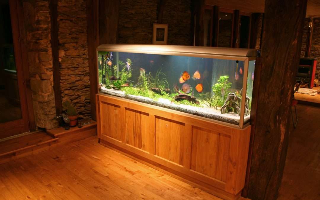 Massachusetts Aquarium Repair & Maintenance Services in Springfield, Worcester, MA