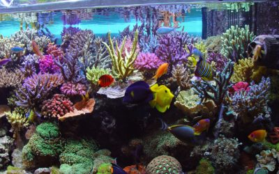 Custom Aquarium Services in Westchester County – Design, Build, Maintenance for Fish Tanks in Westchester