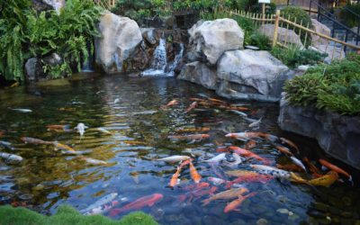 Connecticut Pond Installation & Maintenance Contractors | Water Features, Fountains, Koi Ponds in CT