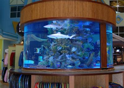 Custom Commercial Aquarium