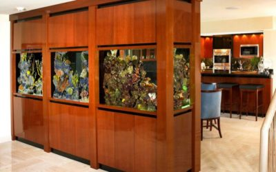 Ridgefield, CT   Custom Aquarium Services   Saltwater Fish Tanks   Coral Reef Aquariums